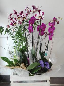 Caixa de plantes