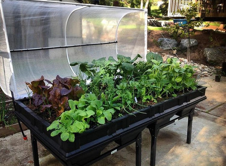 What is the Right Sized Garden Bed For You?