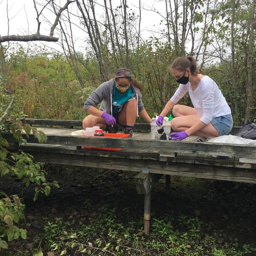 A New Project: The Paintshop Pond