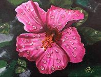 Pink Hibiscus LR.jpg