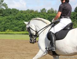 Monte, Spanish Horse