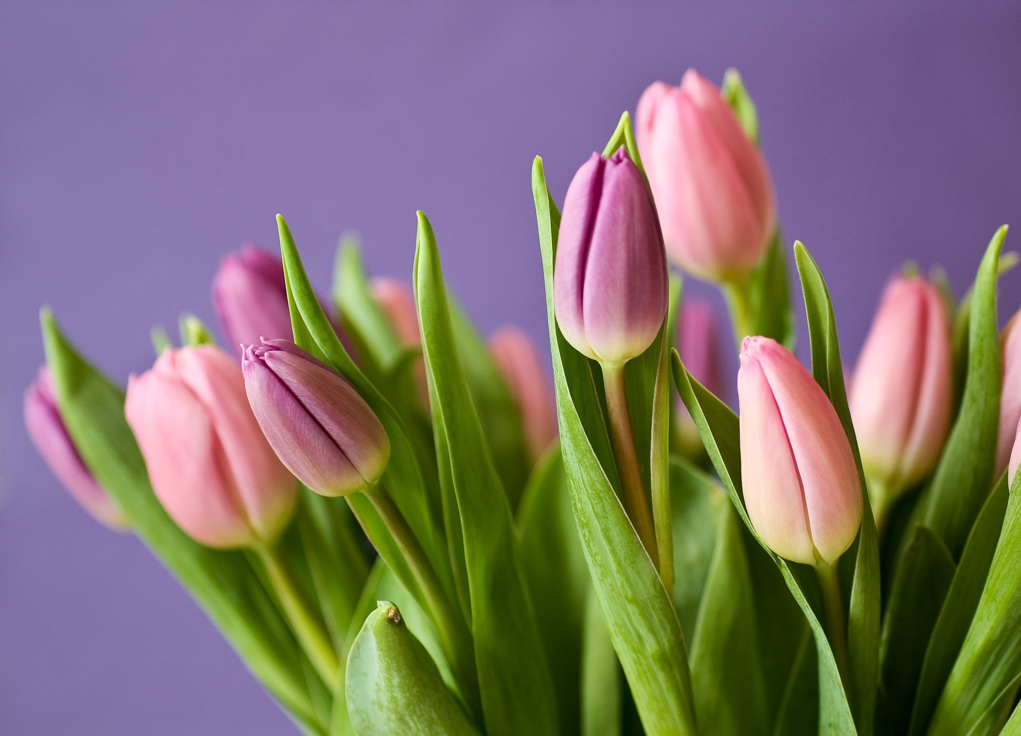 Florist in ann arbor lilys flowers in saline saline izmirmasajfo