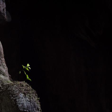 Cave Shrub