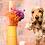 Thumbnail: Fleurs séchées