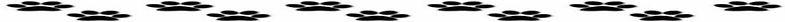 dog-background-1-754x83-858x43-1130x36-1185x33.jpg