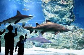Coex Aquarium1.jpg