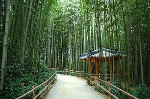 Juknokwon-Bamboo-Garden.jpg