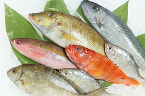 新鮮 きょうちゃんが獲った宮古島の海の幸 1キロ