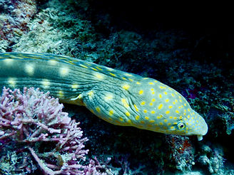 Tropicalsub Diving serpentine