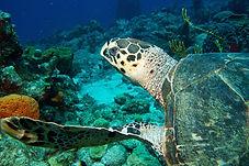 Partez en plongée d'exploration avec Tropicalsub Diving