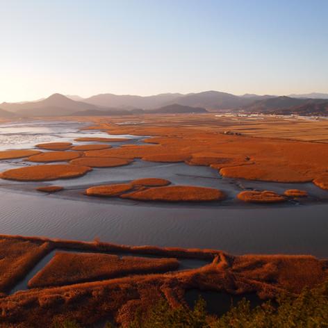 Suncheon Bay