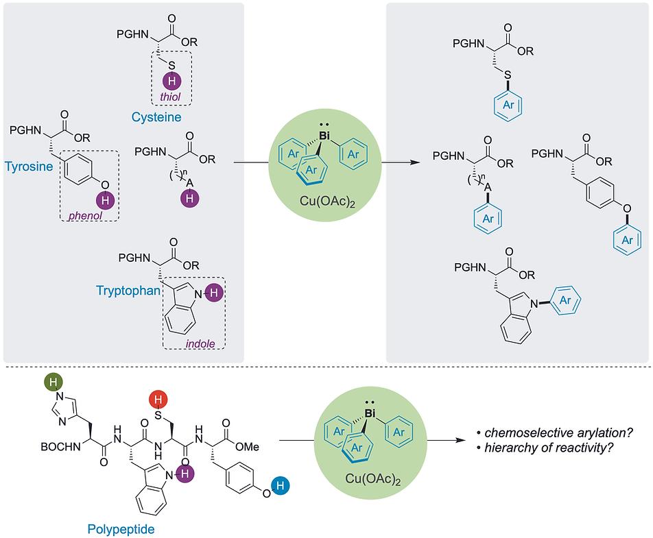 Amino acid without histidine.tiff