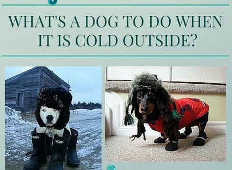 What's a Dog to do When it is Cold Outside?