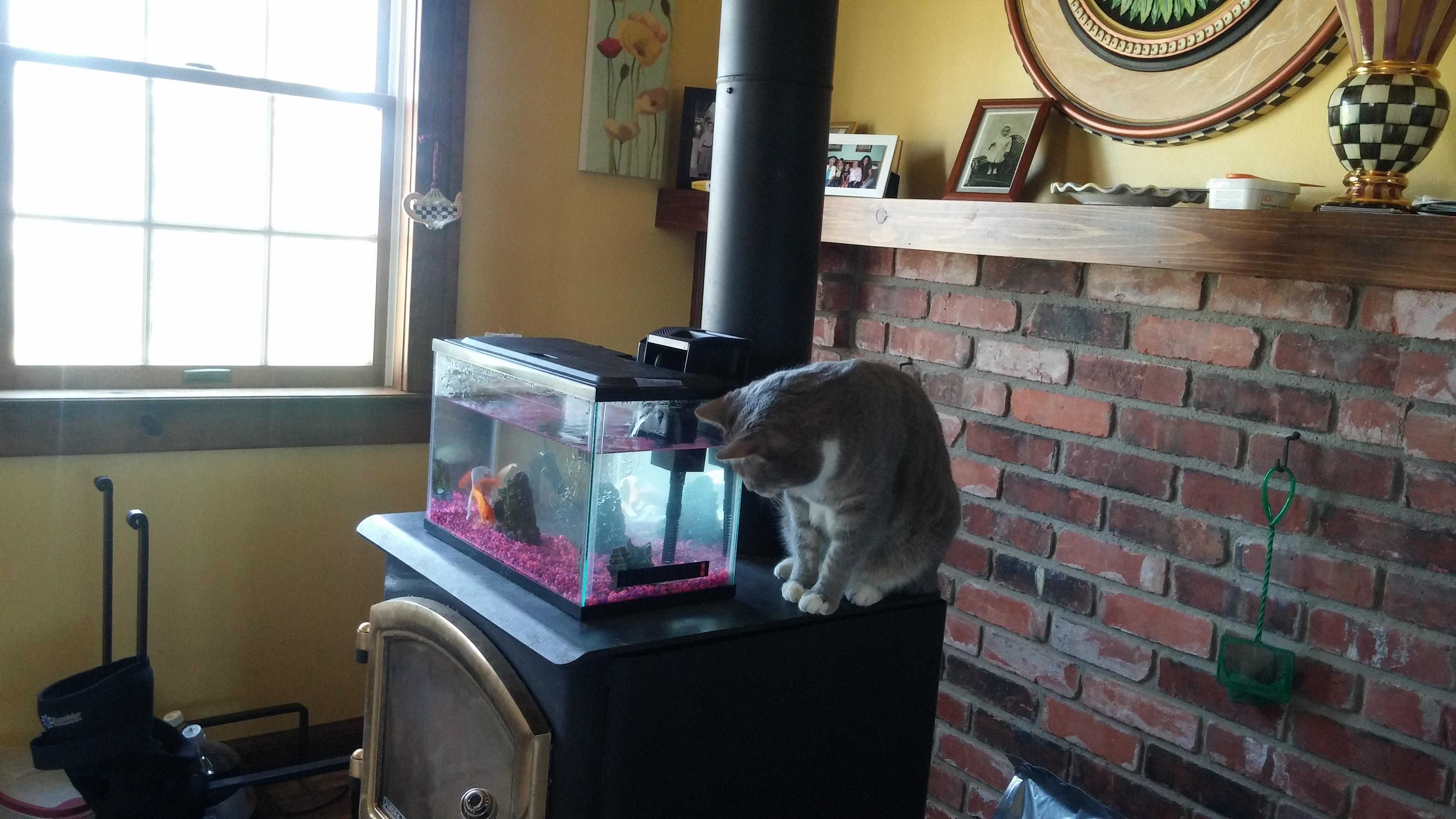Tom helps with the fish!