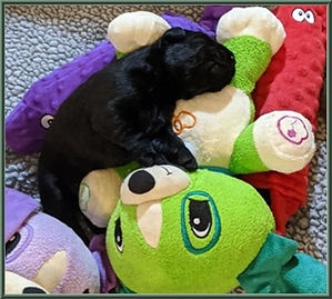 Puppy Page Lilo.jpg