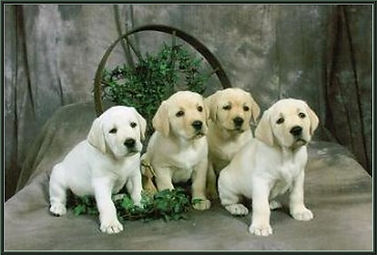Puppy Search Charlie and Gang.jpg
