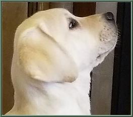 Pedigree Tish Puppy Face.jpg