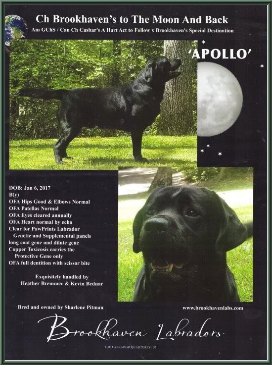 Pedigree Apollo LQ.jpg