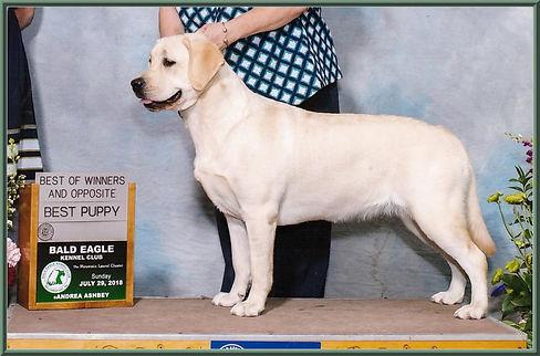 Pedigree Tish Best Puppy.jpg