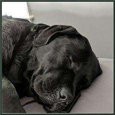 Pedigree Apollo Headshot Sleeping.jpg