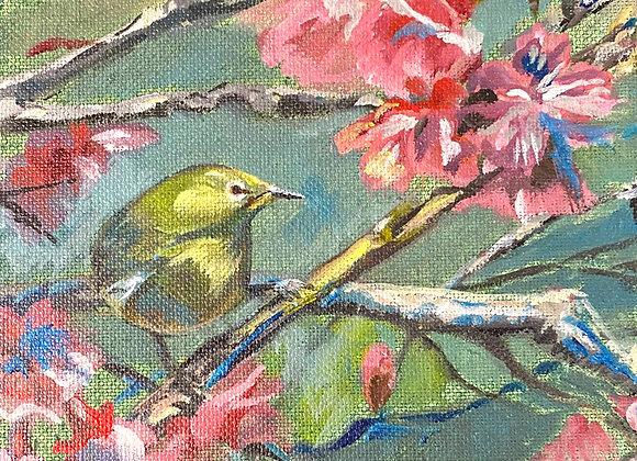 Bird & Blossoms