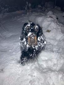 SnowSetter