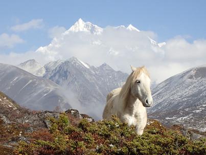 The summit of Gangkhar Puensum. - Bhutan