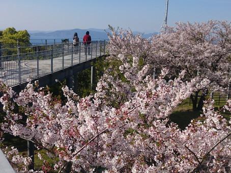 桜の季節🌸part2