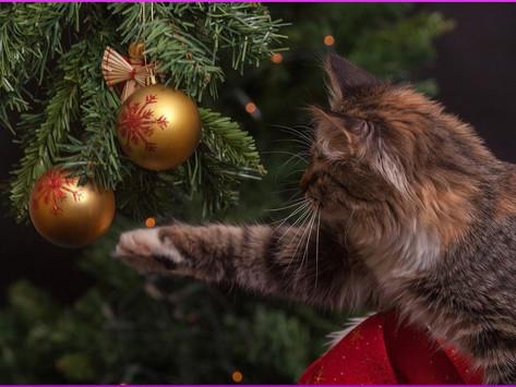 Die Katze & der Weihnachtsbaum