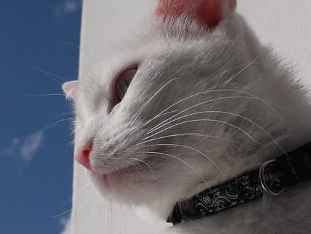 Darum sind Katzenhalsbänder gefährlich!