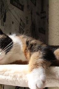 Kratzmöbel Katzenmöbel Test
