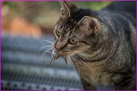 cat-1800898_1280.jpg