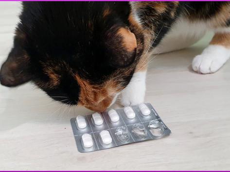 Katzen und Tabletten, wie es gar nicht so schwer ist
