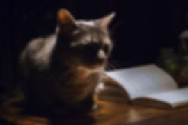 cat-1649955_1280.jpg