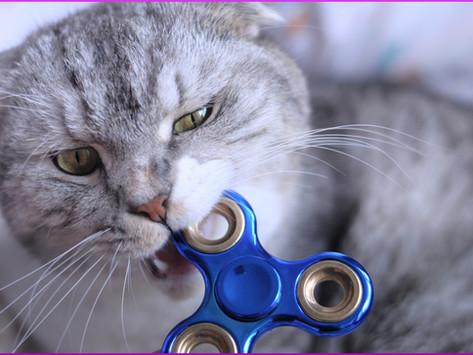 Katzenbiss; Risiken und Behandlung