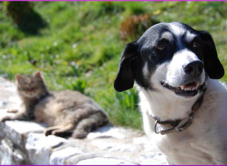 Warum man Katzen nicht mit Hundefutter füttern sollte
