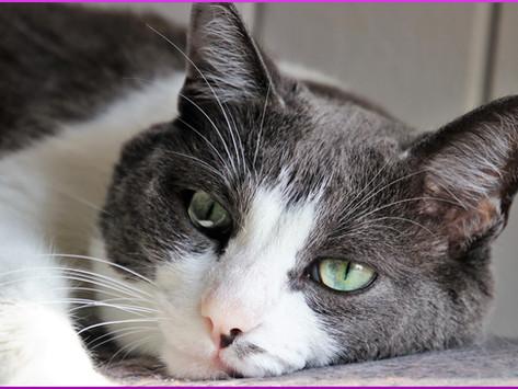 Katzenurin und deren Gerüche richtig entfernen; Tipps und Empfehlungen