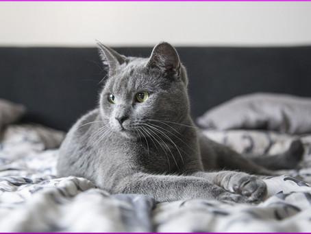 Wie Katzen uns Menschen ihre Zuneigung zeigen