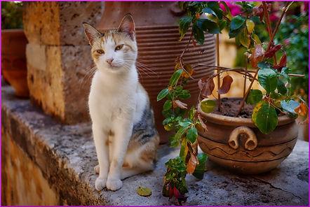 Ratgeber Katze artgerechte Haltung und Ernährung