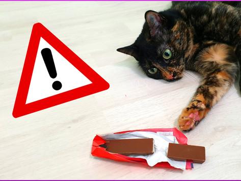 Warum dürfen Katzen keine Schokolade essen?