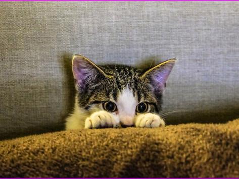 Empfehlenswerte Katzen-Filme für den nächsten Tv-Abend