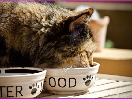 Katze schlingt beim Fressen; Das kann man dagegen tun