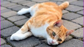 Giardien bei Katzen; Ursachen und Behandlung
