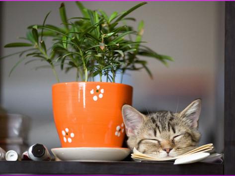 Katze gräbt im Blumentopf, was tun?