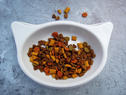 Ist Trockenfutter für Katzen gesund?