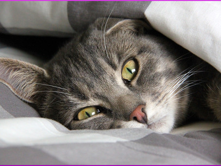 Futtermittelunverträglichkeit bei Katzen