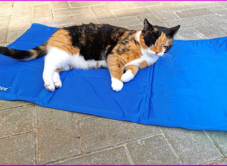Sommerhitze angenehmer gestalten: Kühlmatte für Katzen