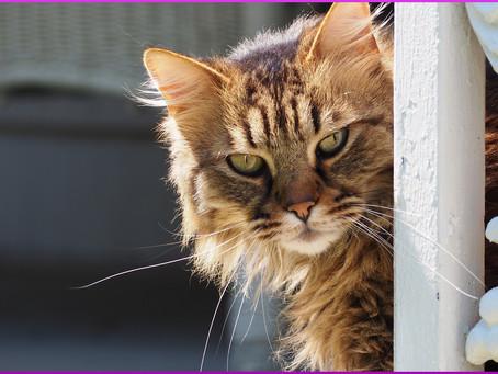 Schäden durch Katzen, wer haftet und muss zahlen?
