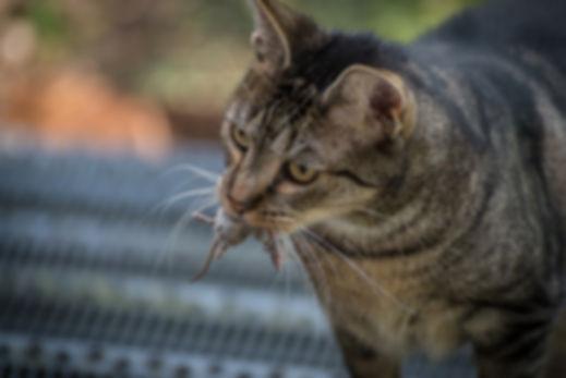 cat-1800898_960_720.jpg
