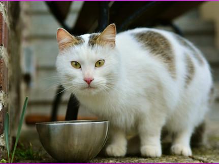 Katzenfutter: wählerische Katze? Gründe und Prävention
